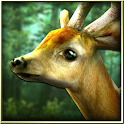 Forest HD apk