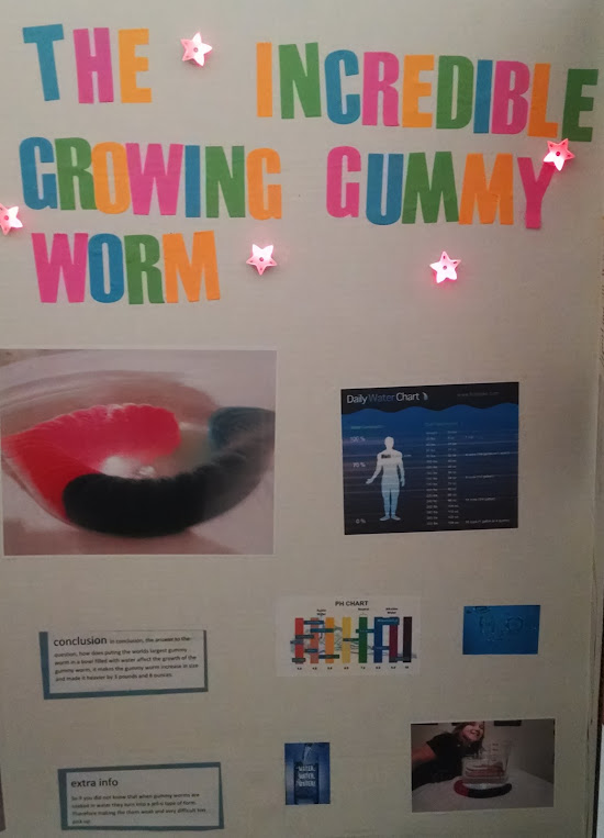 candy experiments enormous gummy worm science fair project