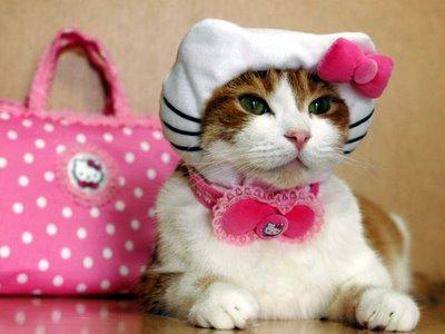 http://4.bp.blogspot.com/_--Kvldlq6BM/S_12V-1NfjI/AAAAAAAAAMU/5mA6-KDn5mc/s1600/kucing+cantik.jpg