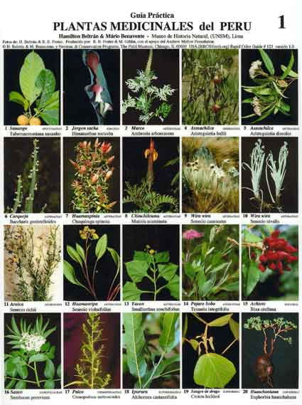 listado de plantas en peligro de extincion: