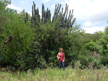 Giant cactus tree things!