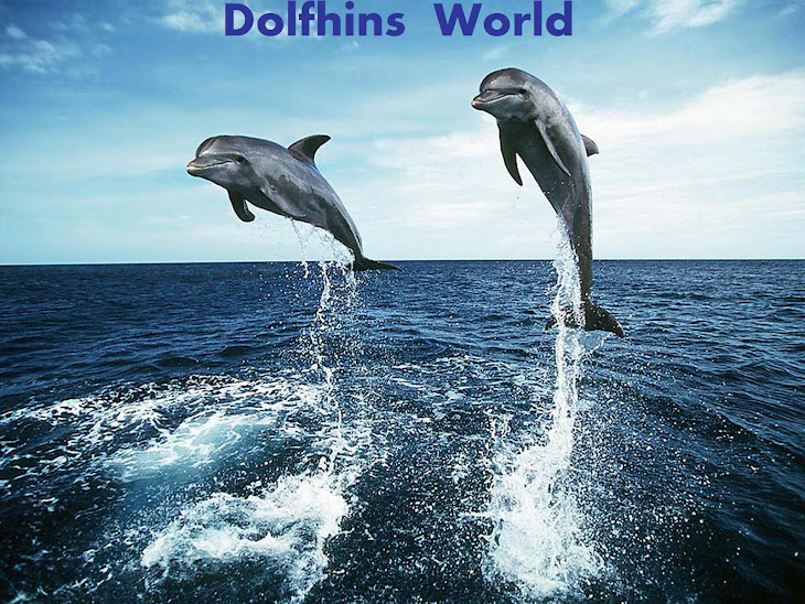 Dolphins World