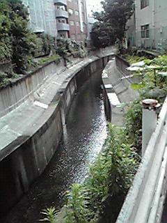 恵比寿付近の小川