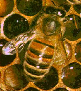 [Pollen1.jpg]