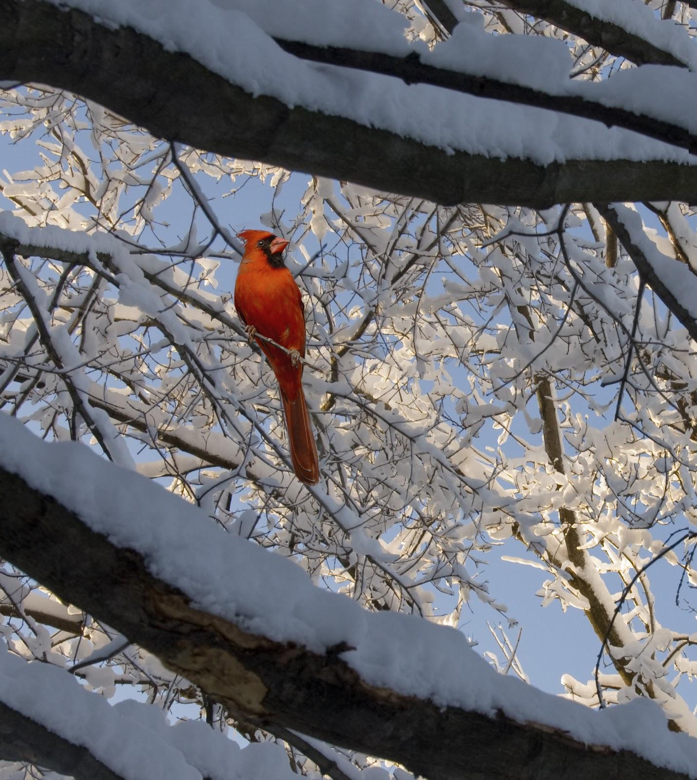 Winter Backyard Birds :  Birds and Butterflies for Beginners Backyard Bird Watching in Winter