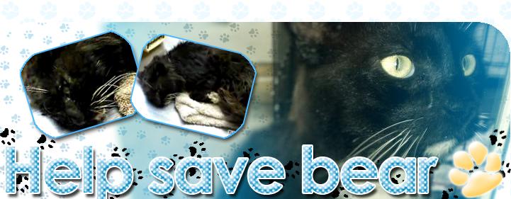 Help Save Bear