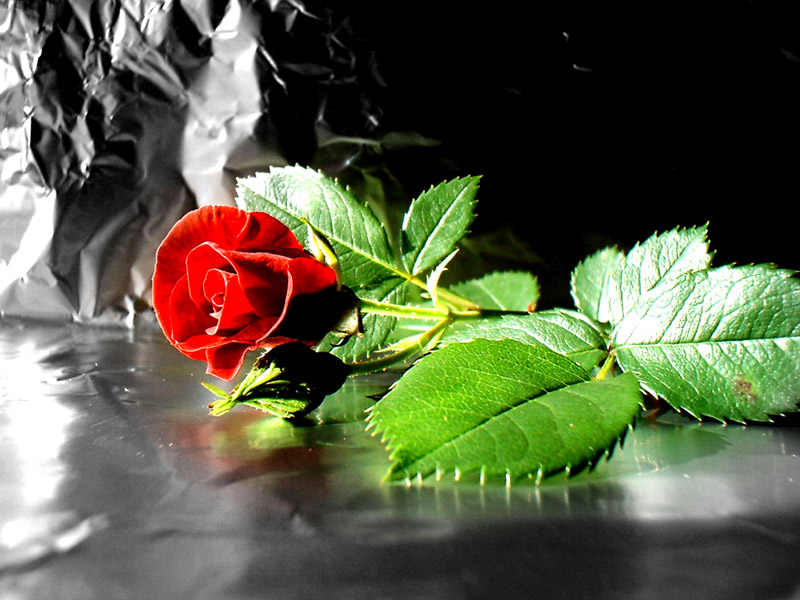 hd amazing pictures amazing pictures of flowers, Natural flower