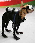 Diver Dog