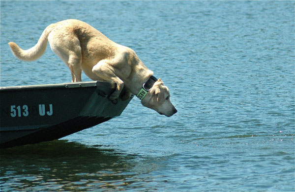 Water-Dog%25201%2520s.jpg