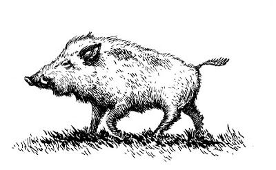 Wild boar of Tuscany - another tale from the dump   Wild Boar Sketch