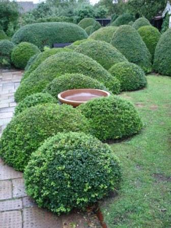 Katarinas trädgård: Nu snackar vi...