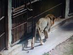 Cuban Zoo