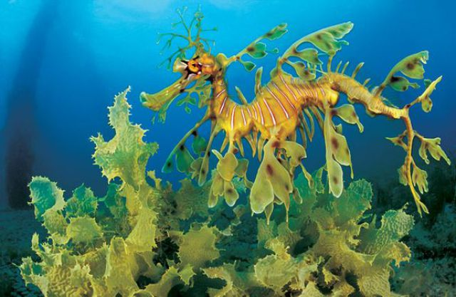 Beautiful Sea Creatures | Amazing Underwater Sea Creatures Seen On www.coolpicturegallery.us