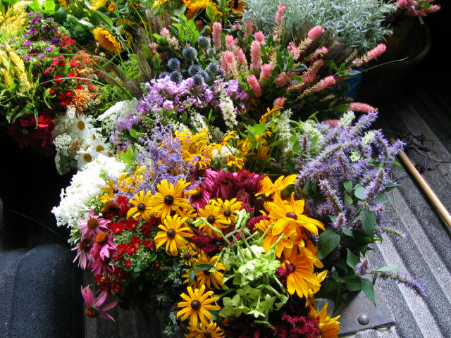 Notes and news from shady grove gardens late august cut flower list late august cut flower list mightylinksfo