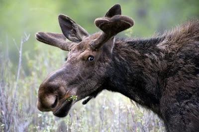 06 - Cutest Animals Pictures
