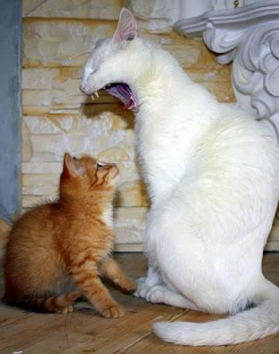 13 - Cutest Animals Pictures