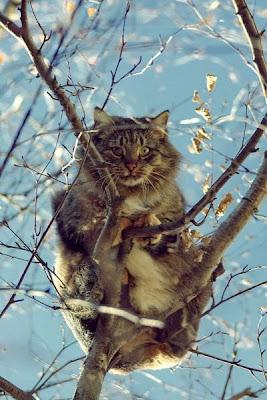 14 - Cutest Animals Pictures