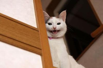 19 - Cutest Animals Pictures