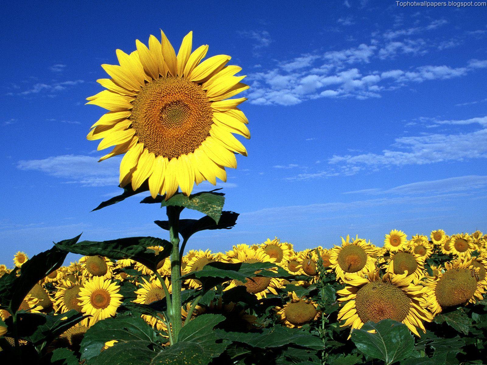 http://4.bp.blogspot.com/_-Cb_iV_LnpU/Ry9SzLHm5bI/AAAAAAAABIc/kvEJsTuLZSY/s1600/Spring%2BDreaming.jpg