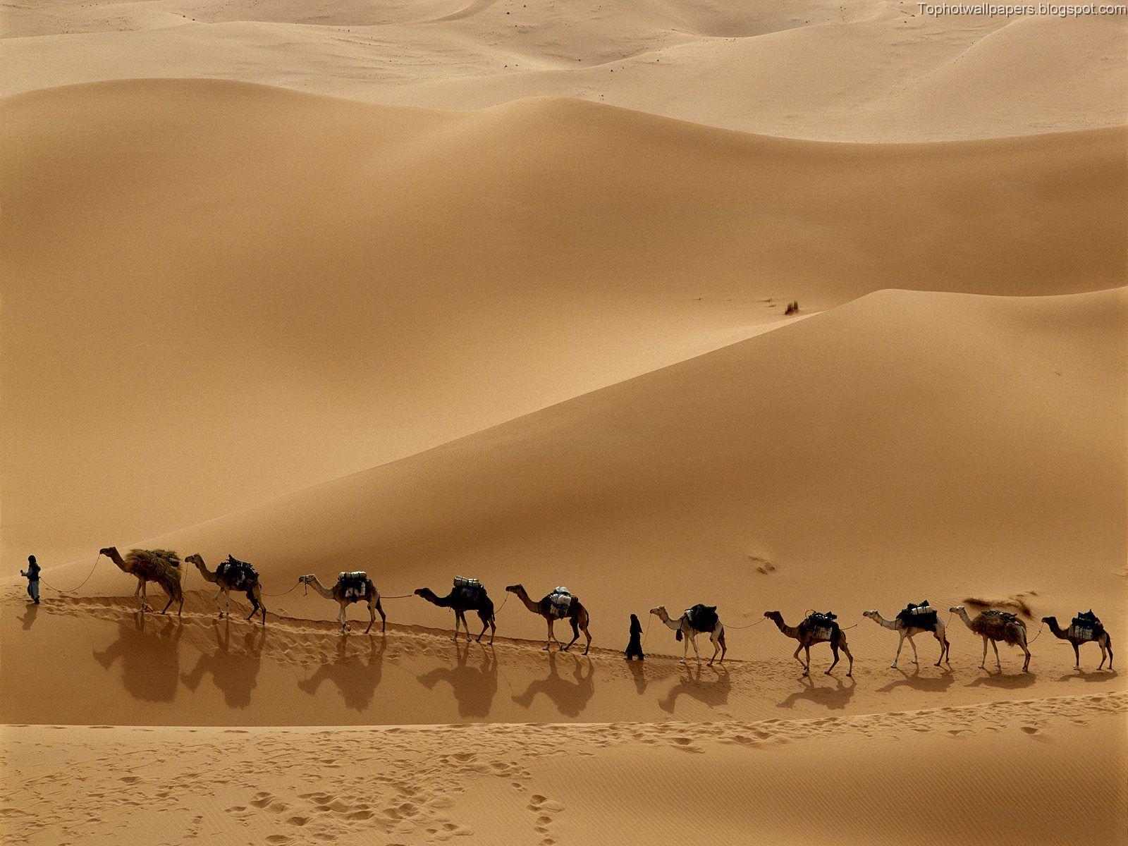 http://4.bp.blogspot.com/_-Cb_iV_LnpU/SDgVKyiOumI/AAAAAAAADHg/04FnCT_h1XM/s1600/Camel%2BCaravan,%2BLibya.jpg