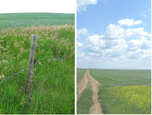 2009 Flax Crop