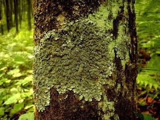 виды мхов и лишайников названия и фото