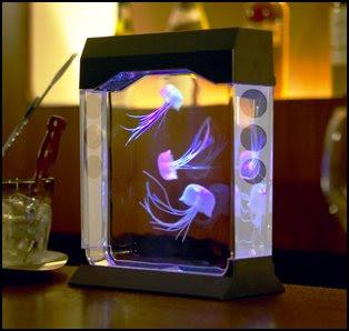 Jelly Fish Tank on Jelly Fish Tank