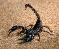 Avatare mess cu scorpioni