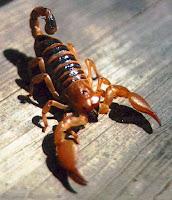 Avatare cu scorpioni