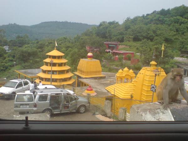 Bagla Mukhi temple