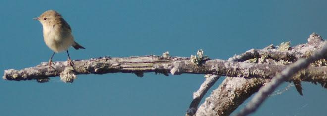 Fauna Vertebrada de Ourense