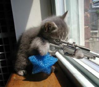 sniper_kitty.jpg