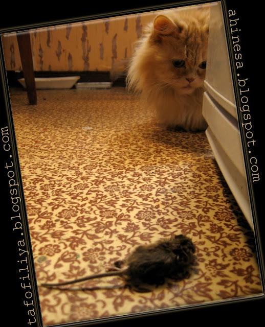 мышь, кот, мышиная смерть