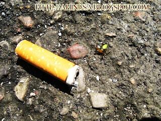 паук, окурок, сигарета