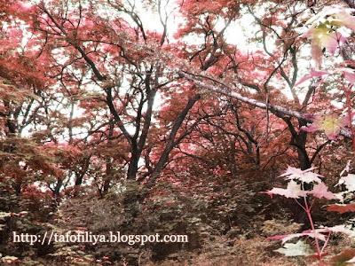 сказочный лес, лесной пейзаж