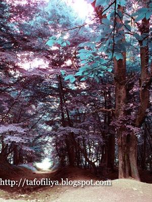 деревья, природа, Румлево, парк Румлево, парк, необычные деревья
