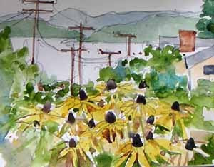 black eyed Susans on Admiral Avenue SW, watercolor sketch by Susan K. Miller