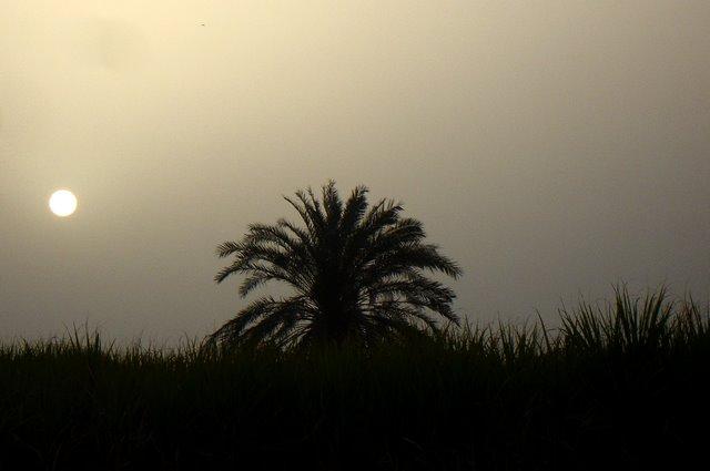 Viento del desierto.