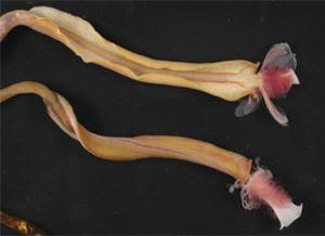 Foto binatang Laut Aneh