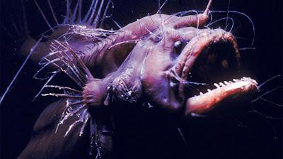 Foto hewan Laut Unik