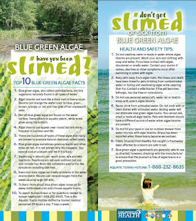 Blue Green Algae - Have you been slimed?
