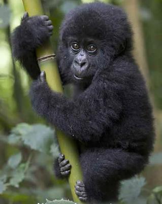 imagenes de animales salvajes bebes - animales salvajes bebe Fotos de archivo e imágenes