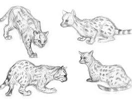 Realistic Baby Animal Drawings