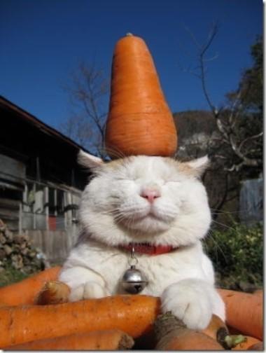 [Image: Kucing+Keren-imut-lucu-menggemaskan-imroee-2.jpg]