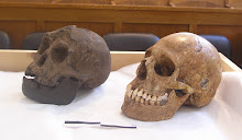Our study of Homo floresiensis