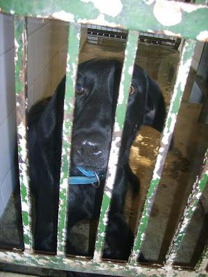 SOS, Perrera de Mairena,, es horrible la cantidad de animales que nos suplican ayuda con sus ojitos S5006911