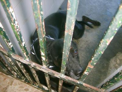 SOS, Perrera de Mairena,, es horrible la cantidad de animales que nos suplican ayuda con sus ojitos S5006915