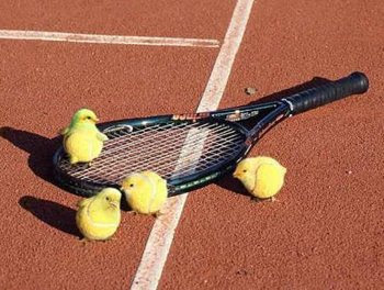 Pintinhos Bolas de Tênis