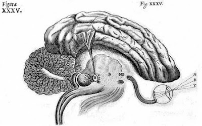 bewustzijn en hersenen