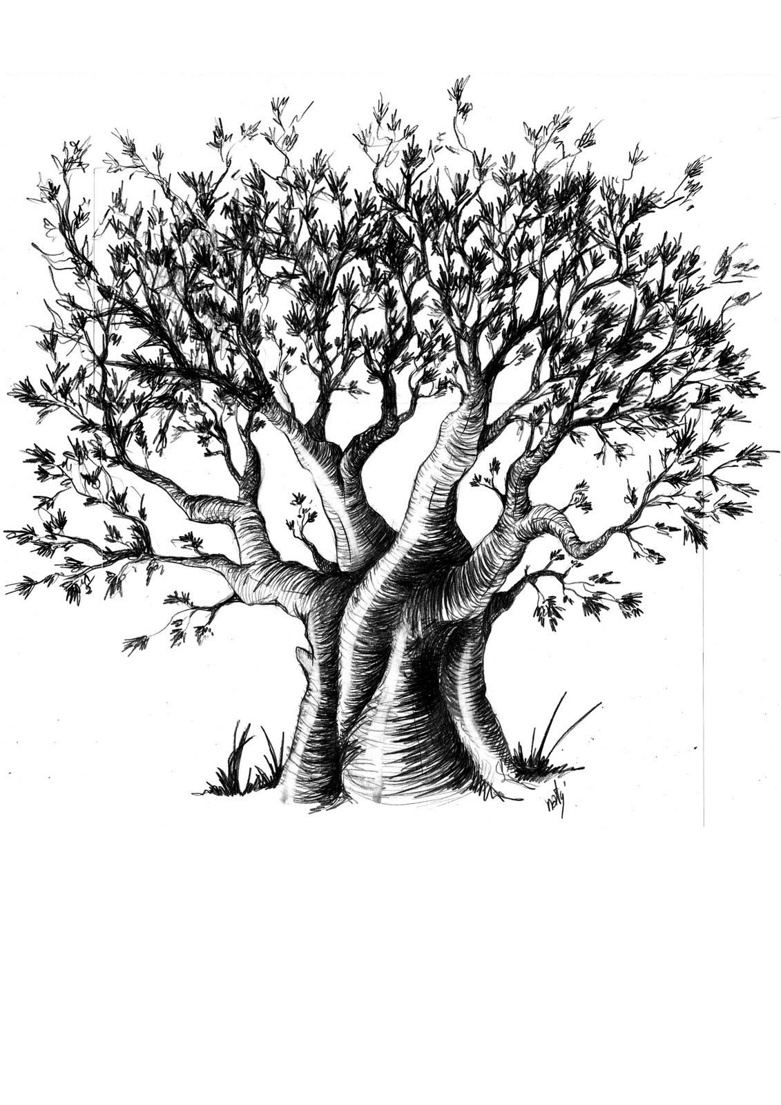 Naty 176 Le Couteau Suisse Artistique La Force Du Baobab